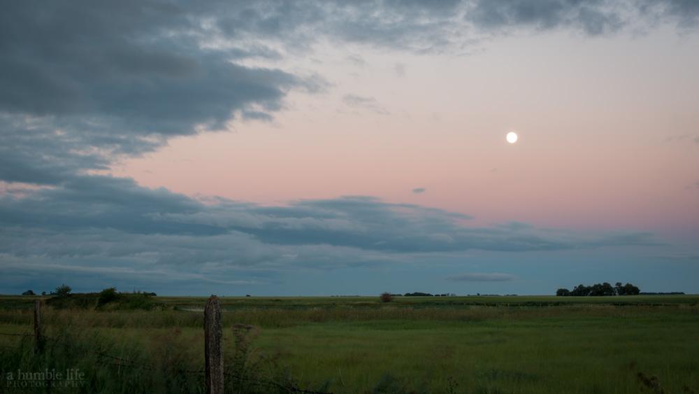 Pasture Twilight