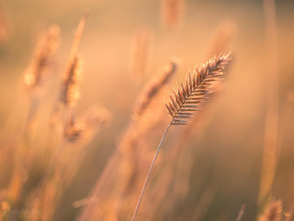 Sunlite Grass