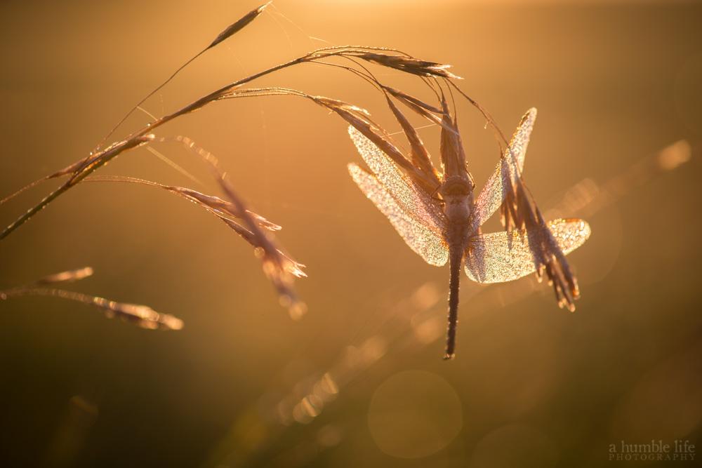 Glowing Wings