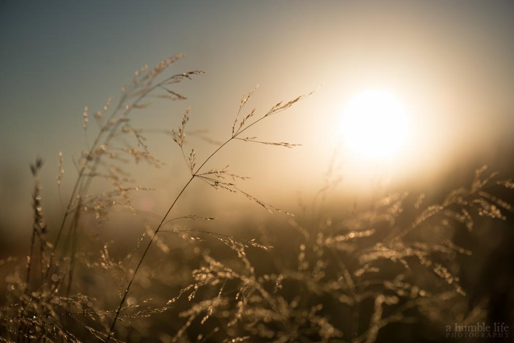 Delicate Sunrise