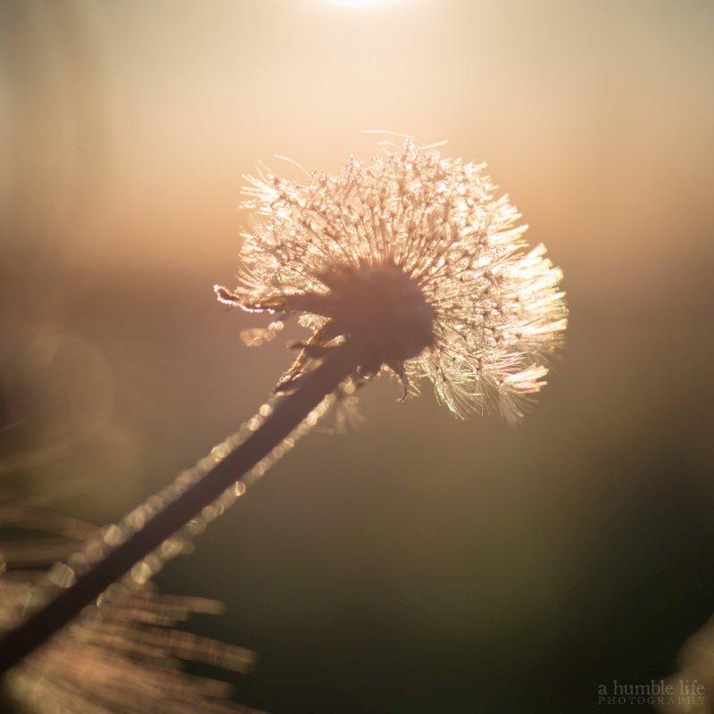 Tomorrow's Weeds