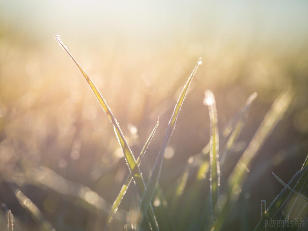 Sun Kissed Grass