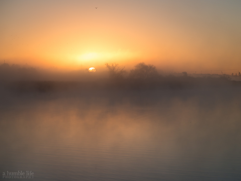 Wascana Lake Sunrise