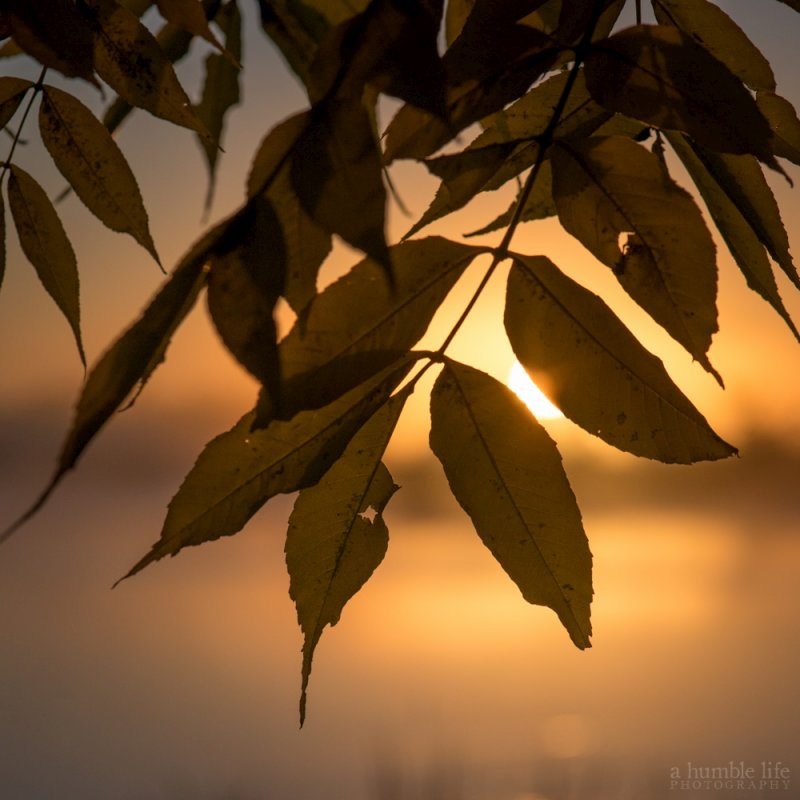 Sunrise Through the Leaves