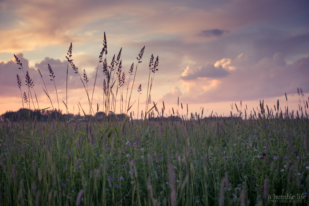 Prairie Sunet