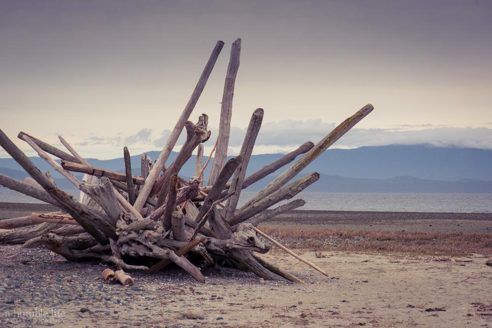 Rathtrevor Driftwood Sculpture