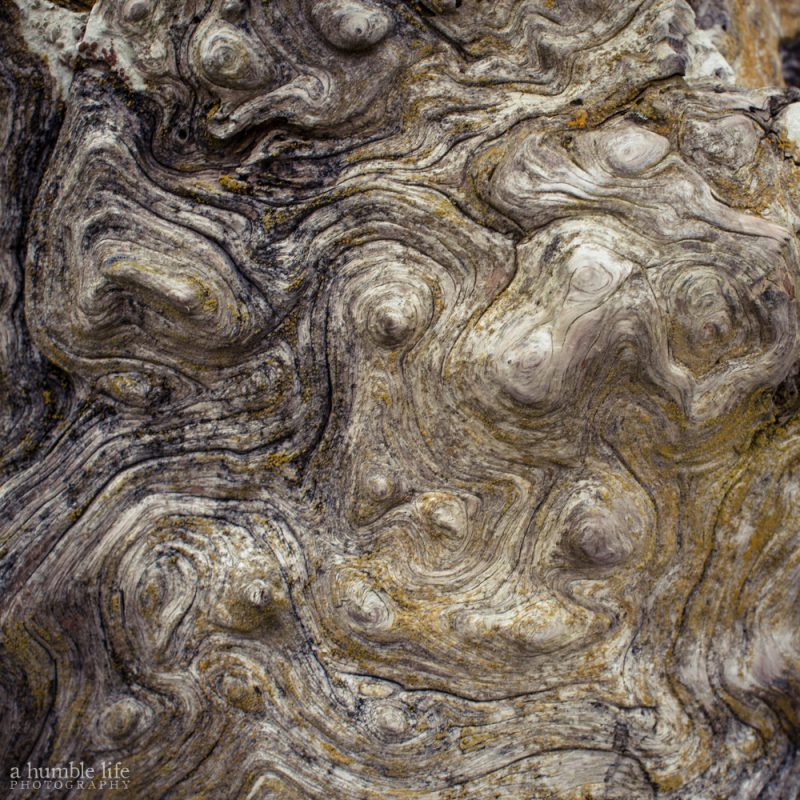 Nature Imitating van Gogh